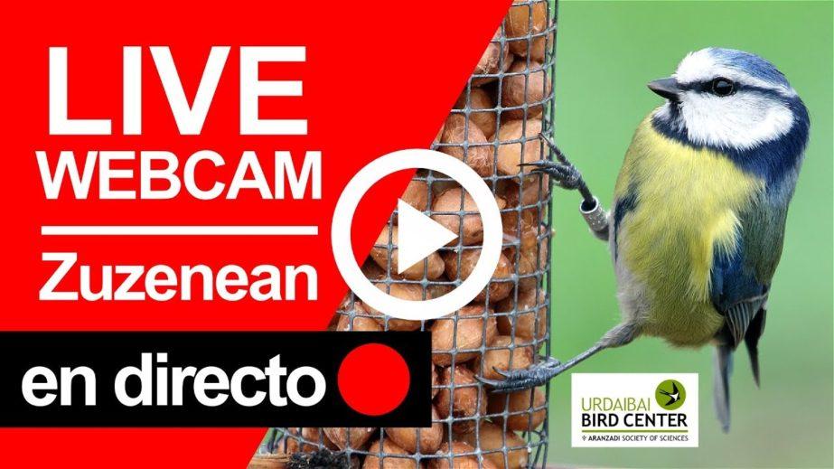 Urdaibai Bird Center Live Cam -Vizcaya,  Spain 🇪🇸