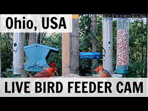 Bird Feeder  – Live cam Ohio, USA 🇺🇸