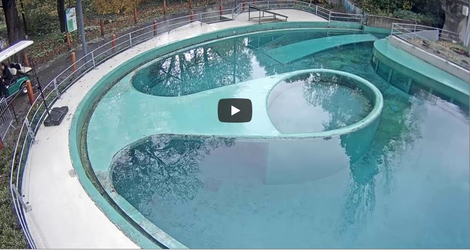 Live Cam Hungary, Budapest Zoo Seal Pool 19