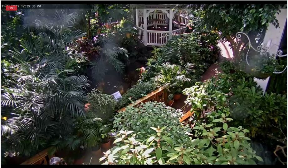 Live Cam USA, The Key West Butterfly and Nature Conservatory 9