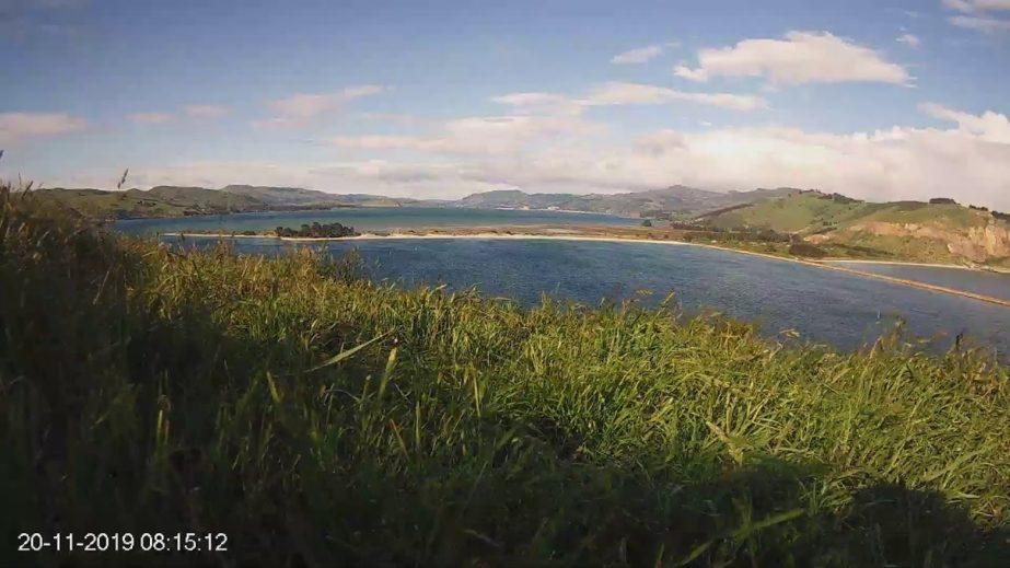 Live Cam New Zealand, albatross colony, Taiaroa Head 21