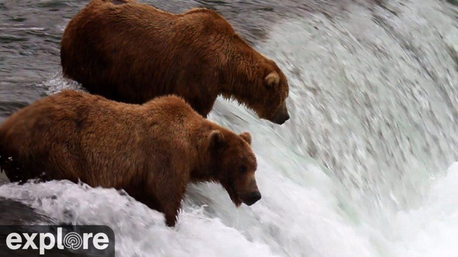 Live Cam USA, Brooks Falls - Katmai National Park, Alaska 18