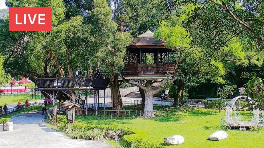 Live Cam Taiwan, Hutoushan Park Owl Forest 14