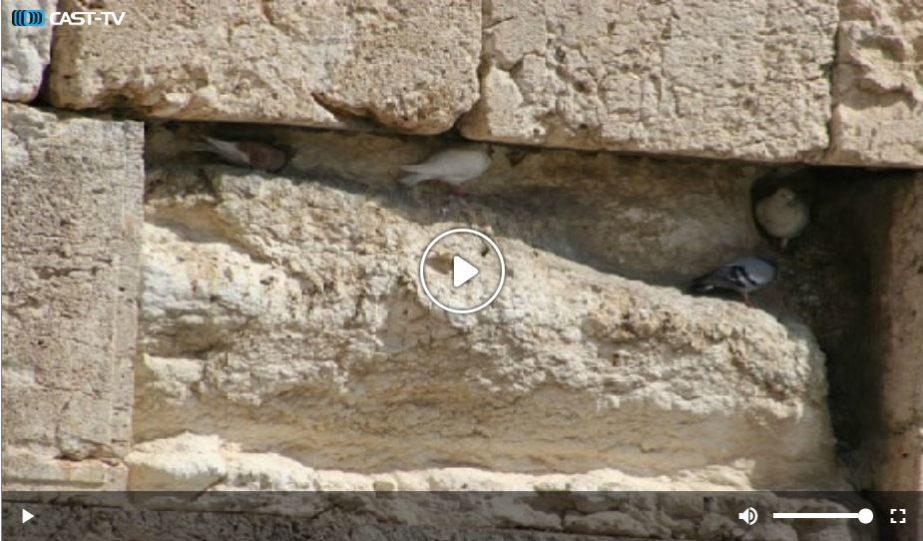 Live Cam Israel, Wilson's Arch, Western Wall Jerusalem 1