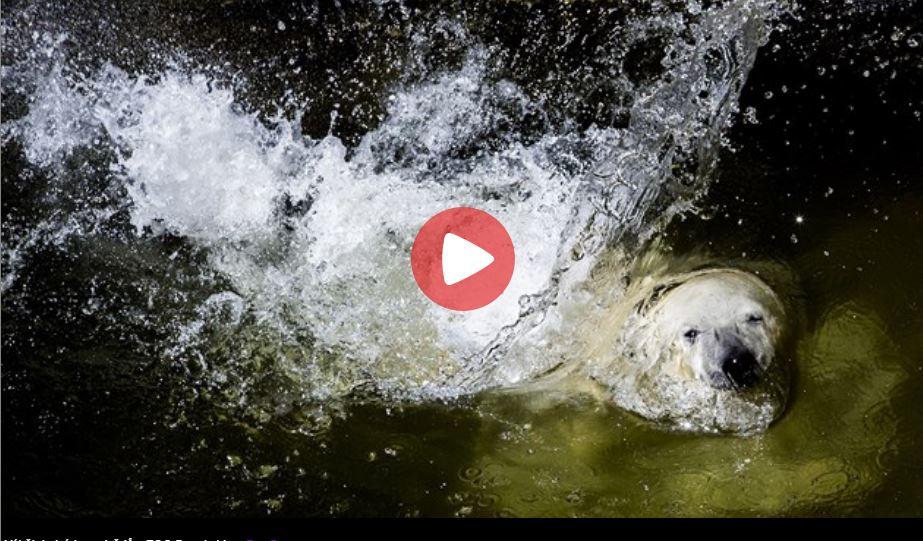 brno zoo live cam