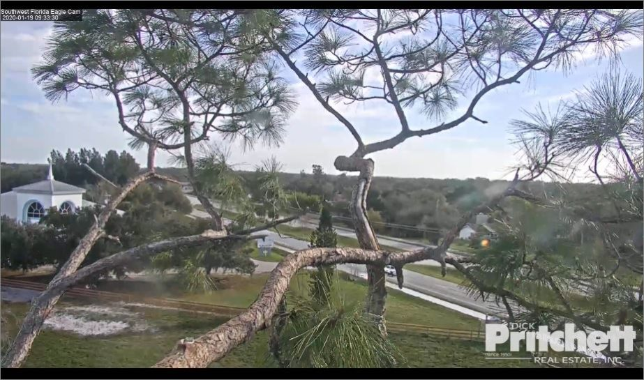 florida eagles live cam
