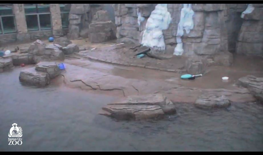 kansas city zoo live cam