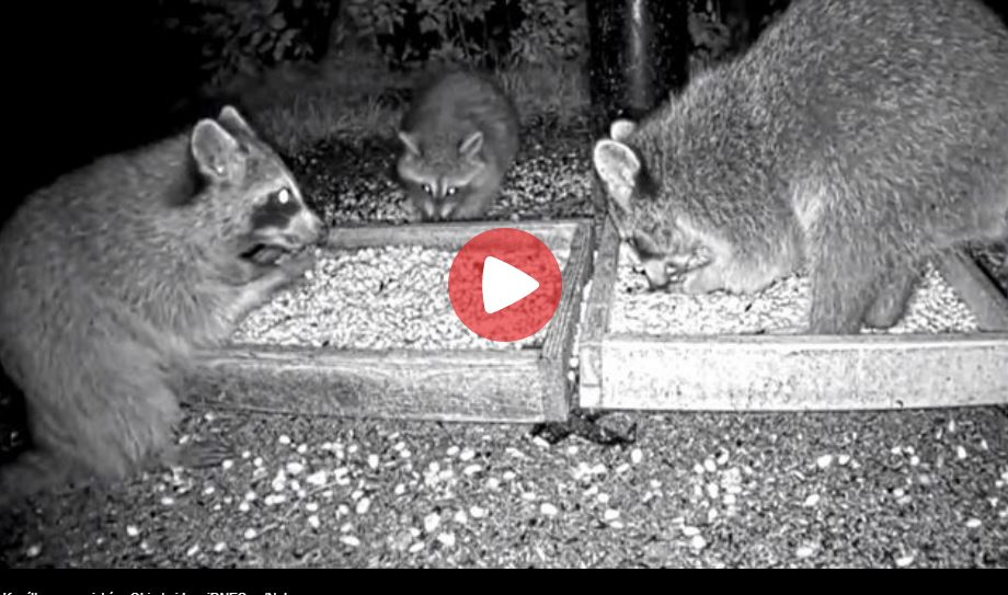 wildlife feeder live cam
