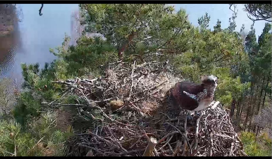 loch of lowes live cam
